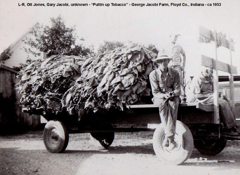 George Jacobi Farm putting up tobacco (1953)